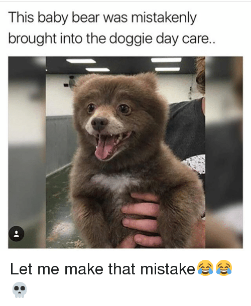 Memes, Bear, and Baby: This baby bear was mistakenly  brought into the doggie day care. Let me make that mistake😂😂💀