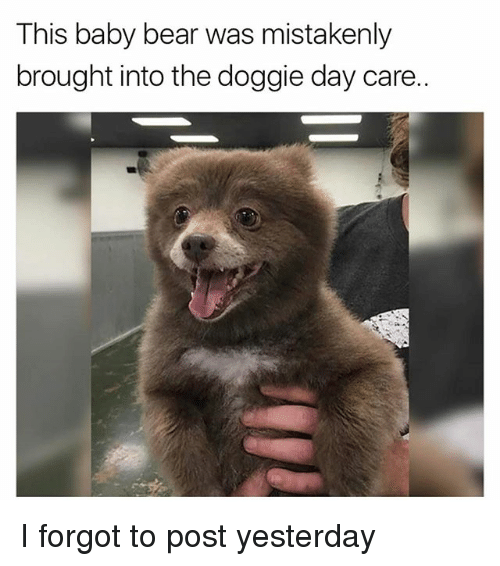 Memes, Bear, and Baby: This baby bear was mistakenly  brought into the doggie day care. I forgot to post yesterday