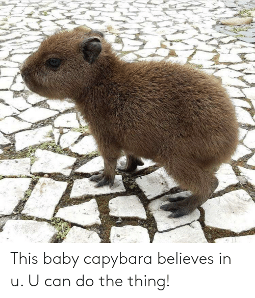 the thing: This baby capybara believes in u. U can do the thing!