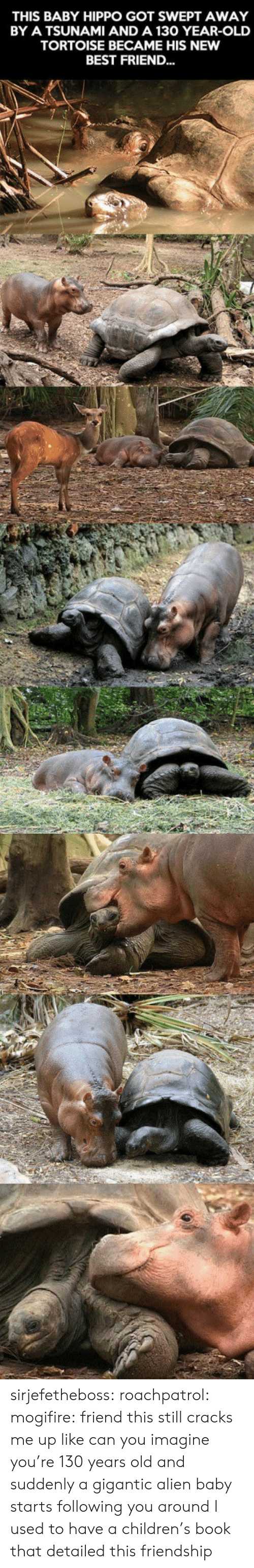 Alien Baby: THIS BABY HIPPO GOT SWEPT AWAY  BY A TSUNAMI AND A 130 YEAR-OLD  TORTOISE BECAME HIS NEW  BEST FRIEND... sirjefetheboss:  roachpatrol: mogifire: friend this still cracks me up like can you imagine you're 130 years old and suddenly a gigantic alien baby starts following you around  I used to have a children's book that detailed this friendship