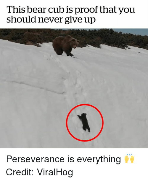 cub: This bear cub is proof that you  should never give up Perseverance is everything 🙌  Credit: ViralHog