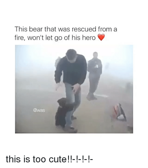 bearings: This bear that was rescued from a  fire, won't let go of his hero  @was this is too cute!!-!-!-!-