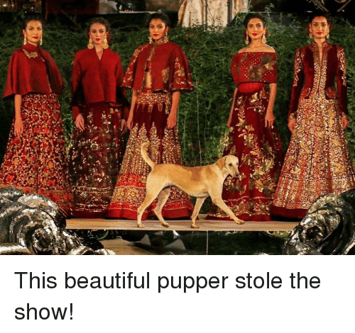 Beautiful, Show, and Stole