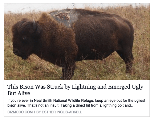 direct hit: This Bison Was Struck by Lightning and Emerged Ugly  But Alive  If you're ever in Neal Smith National Wildlife Refuge, keep an eye out for the ugliest  bison alive. That's not an insult. Taking a direct hit from a lightning bolt and...  GIZMODO.COMI BY ESTHER INGLIS-ARKELL