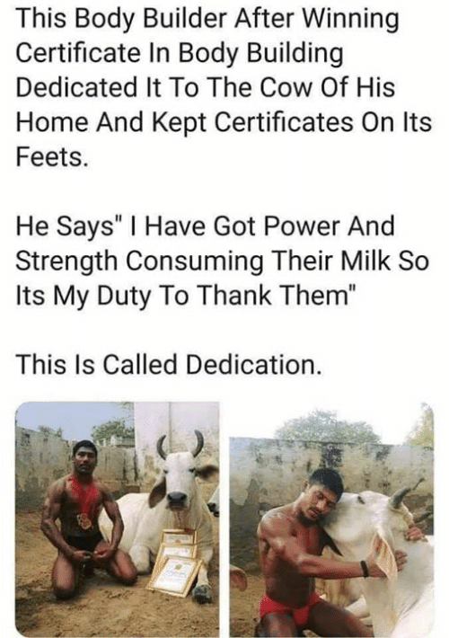 """Have Got: This Body Builder After Winning  Certificate In Body Building  Dedicated It To The Cow Of His  Home And Kept Certificates On Its  Feets.  He Says' I Have Got Power And  Strength Consuming Their Milk So  Its My Duty To Thank Them""""  This Is Called Dedication."""