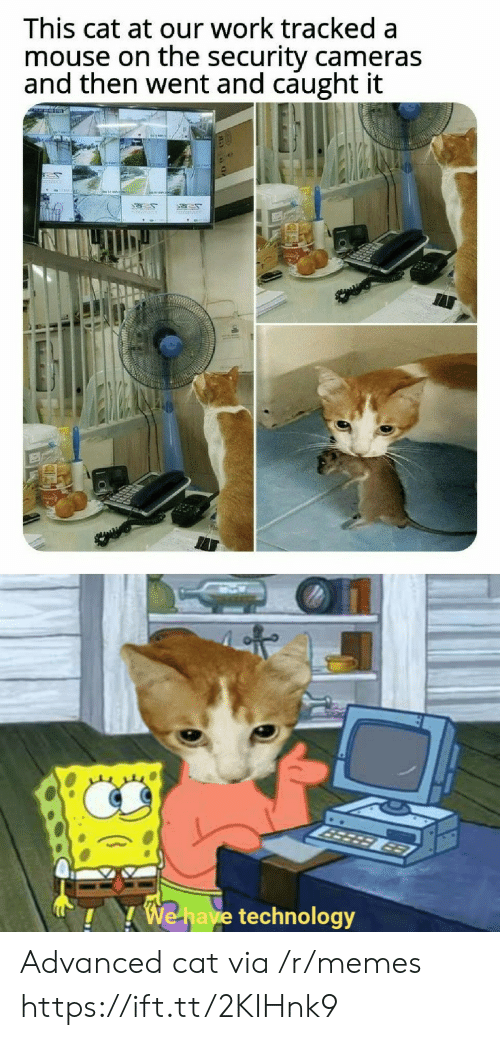 Memes, Work, and Mouse: This cat at our work tracked a  mouse on the security cameras  and then went and caught it  50  3er  MEWAR  963  We have technology Advanced cat via /r/memes https://ift.tt/2KIHnk9