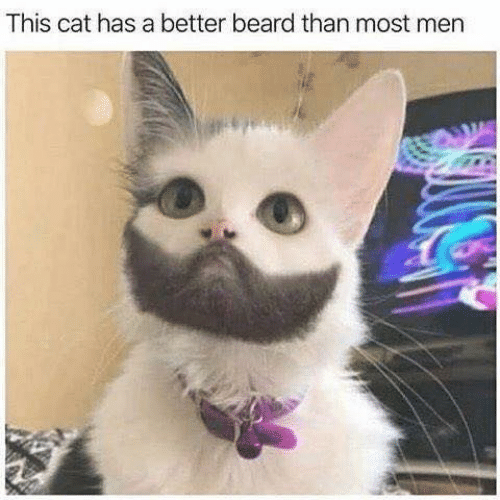 Beard, Memes, and 🤖: This cat has a better beard than most men
