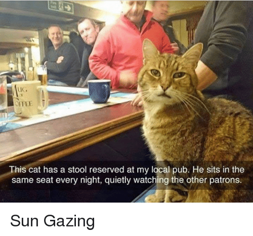 stool: This cat has a stool reserved at my local pub. He sits in the  same seat every night, quietly watching the other patrons. Sun Gazing