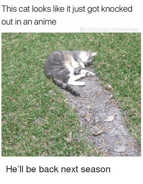 knocked out: This cat looks like it just got knocked  out in an anime  He'll be back next season