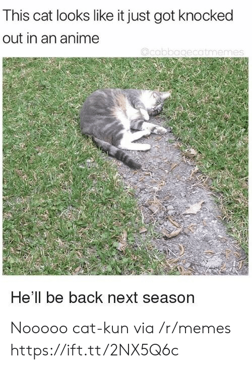 knocked out: This cat looks like it just got knocked  out in an anime  He'll be back next season Nooooo cat-kun via /r/memes https://ift.tt/2NX5Q6c