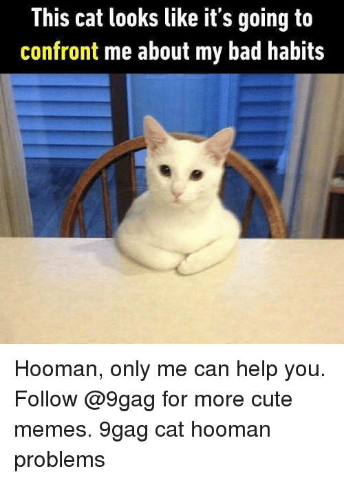 Confrontable: This cat looks like it's going ta  confront me about my bad habits Hooman, only me can help you. Follow @9gag for more cute memes. 9gag cat hooman problems