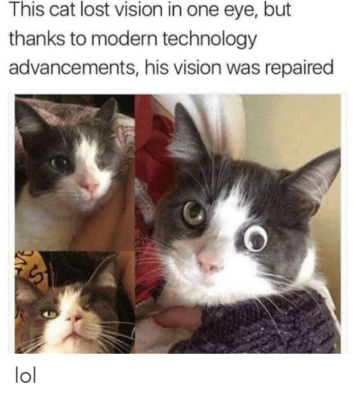 Lol, Lost, and Vision: This cat lost vision in one eye, but  thanks to modern technology  advancements, his vision was repaired lol