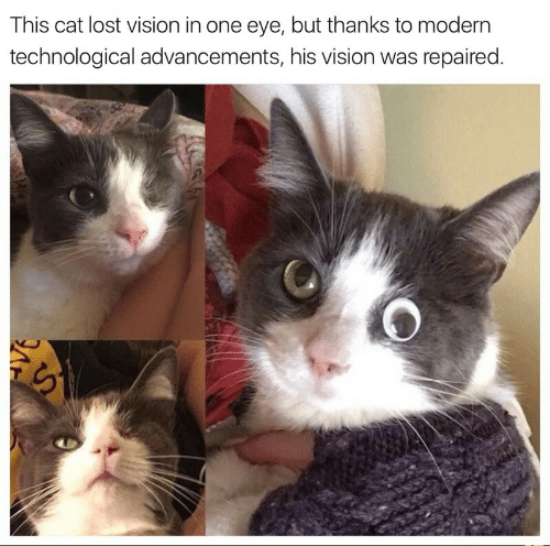 Lost, Vision, and Cat: This cat lost vision in one eye, but thanks to modern  technological advancements, his vision was repaired.