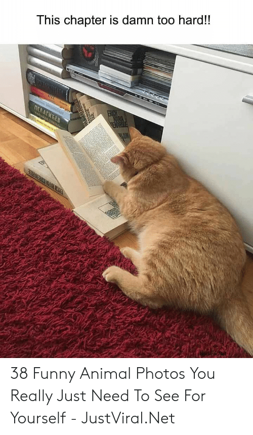 funny animal: This chapter is damn too hard!!  ПЕКАГИЋЕВ  REMARD 38 Funny Animal Photos You Really Just Need To See For Yourself - JustViral.Net