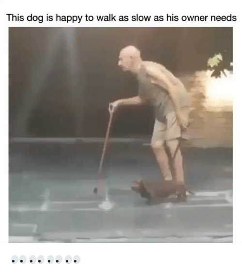 Funny, Happy, and Dog: This dog is happy to walk as slow as his owner needs 👀👀👀👀