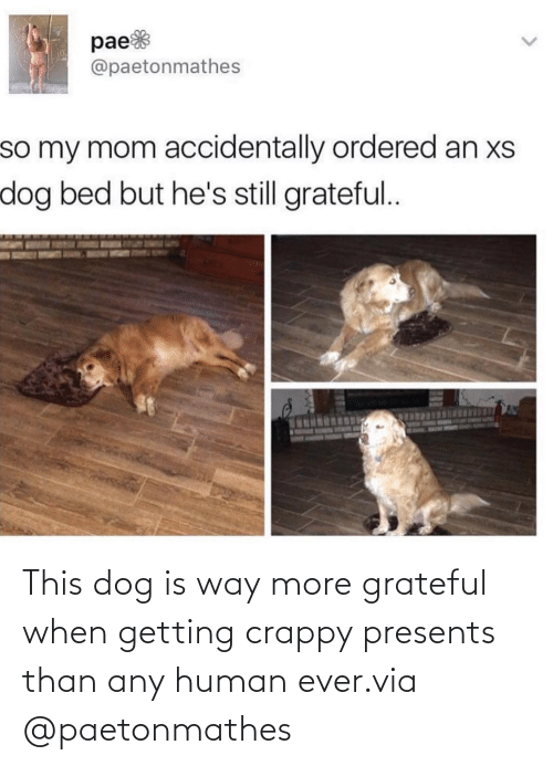 human: This dog is way more grateful when getting crappy presents than any human ever.via @paetonmathes
