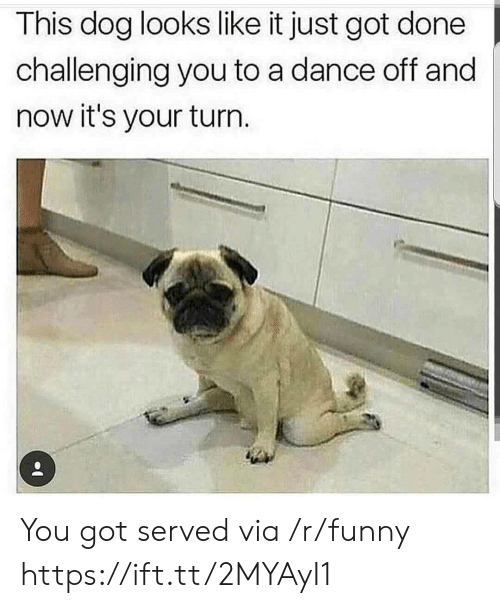 Its Your Turn: This dog looks like it just got done  challenging you to a dance off and  now it's your turn You got served via /r/funny https://ift.tt/2MYAyI1