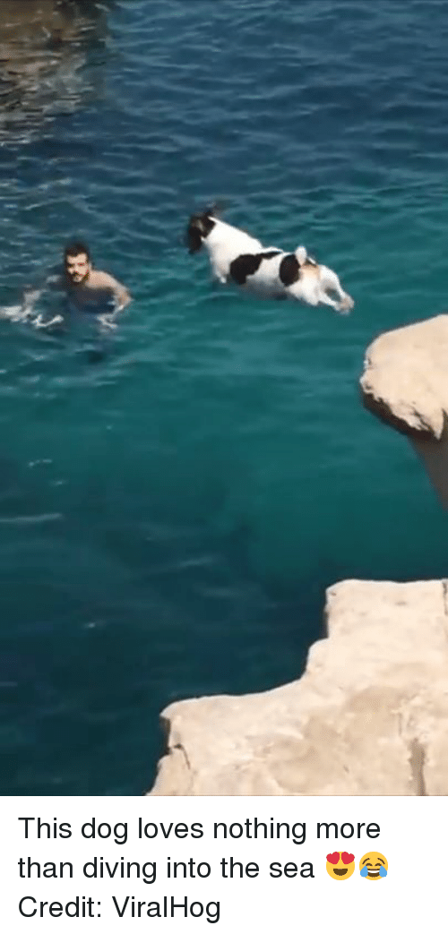 Dog, More, and This: This dog loves nothing more than diving into the sea 😍😂  Credit: ViralHog