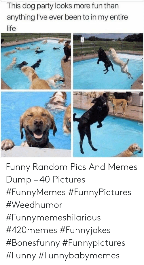 Pics And: This dog party looks more fun than  anything I've ever been to in my entire  life Funny Random Pics And Memes Dump – 40 Pictures #FunnyMemes #FunnyPictures #Weedhumor #Funnymemeshilarious #420memes #Funnyjokes #Bonesfunny #Funnypictures #Funny #Funnybabymemes