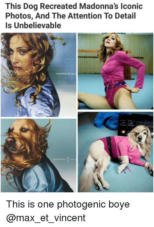 madonna: This Dog Recreated Madonna's lconic  Photos, And The Attention To Detail  Is Unbelievable  MADONNA) (ray o  MAXDONNA I ray o This is one photogenic boye @max_et_vincent