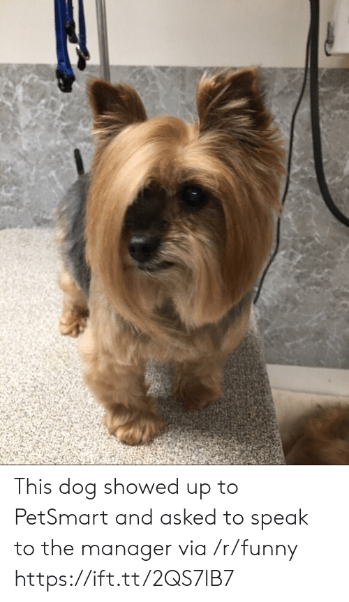 Petsmart: This dog showed up to PetSmart and asked to speak to the manager via /r/funny https://ift.tt/2QS7lB7