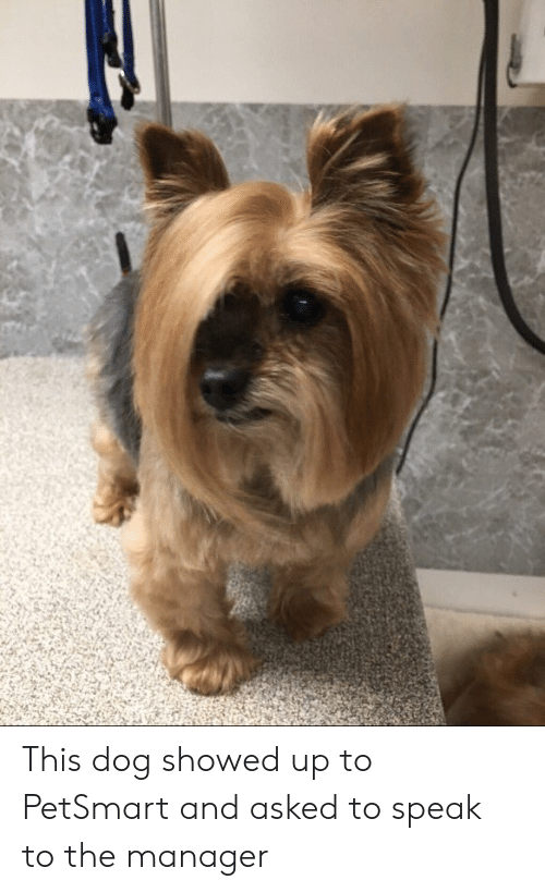 Petsmart: This dog showed up to PetSmart and asked to speak to the manager
