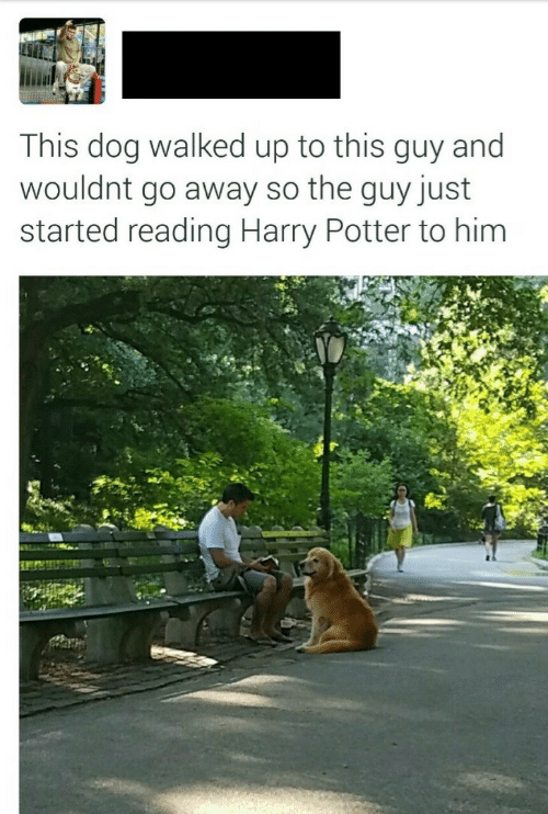 Harry Potter, Potter, and Dog: This dog walked up to this guy and  wouldnt go away so the guy just  started reading Harry Potter to him