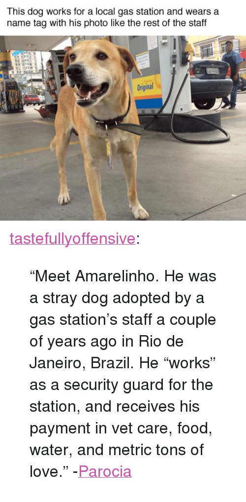 """Dog Adopted: This dog works for a local gas station and wears a  name tag with his photo like the rest of the staff  Original <p><a href=""""http://tumblr.tastefullyoffensive.com/post/118259422602/meet-amarelinho-he-was-a-stray-dog-adopted-by-a"""" class=""""tumblr_blog"""" target=""""_blank"""">tastefullyoffensive</a>:</p>  <blockquote><p>""""Meet Amarelinho. He was a stray dog adopted by a gas station's staff a couple of years ago in Rio de Janeiro, Brazil. He """"works"""" as a security guard for the station, and receives his payment in vet care, food, water, and metric tons of love."""" -<a href=""""http://www.reddit.com/user/parocia"""" target=""""_blank"""">Parocia</a><br/></p></blockquote>"""