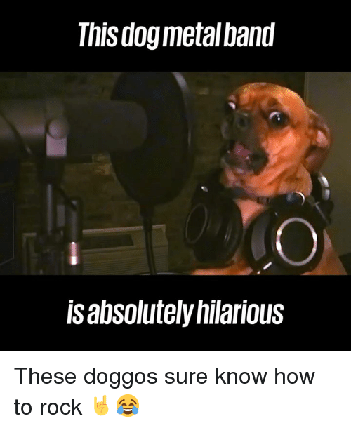 how to rock: This dogmetalband  lsabsolutely hilarious These doggos sure know how to rock 🤘😂
