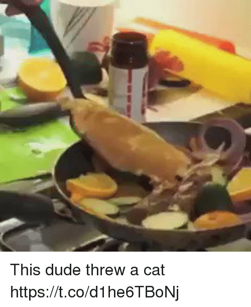 Duded: This dude threw a cat https://t.co/d1he6TBoNj