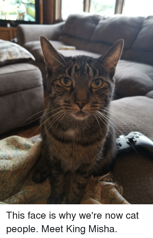 Cat, King, and Why: This face is why we're now cat people. Meet King Misha.