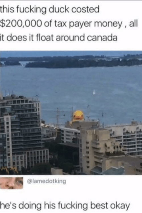 Hes Doing: this fucking duck costed  $200,000 of tax payer money, all  it does it float around canada  @lamedotking  he's doing his fucking best okay
