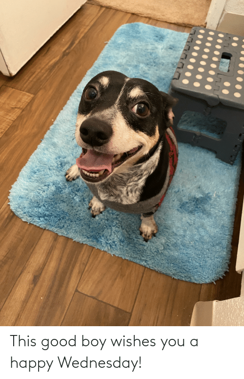 Wednesday: This good boy wishes you a happy Wednesday!