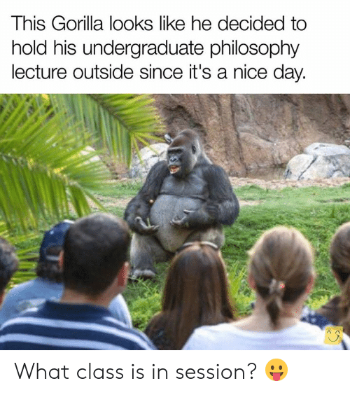 Dank, Philosophy, and Nice: This Gorilla looks like he decided to  hold his undergraduate philosophy  lecture outside since it's a nice day. What class is in session?  😛