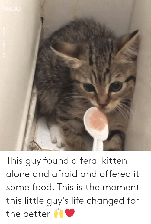 Being Alone, Dank, and Food: This guy found a feral kitten alone and afraid and offered it some food. This is the moment this little guy's life changed for the better 🙌❤️️