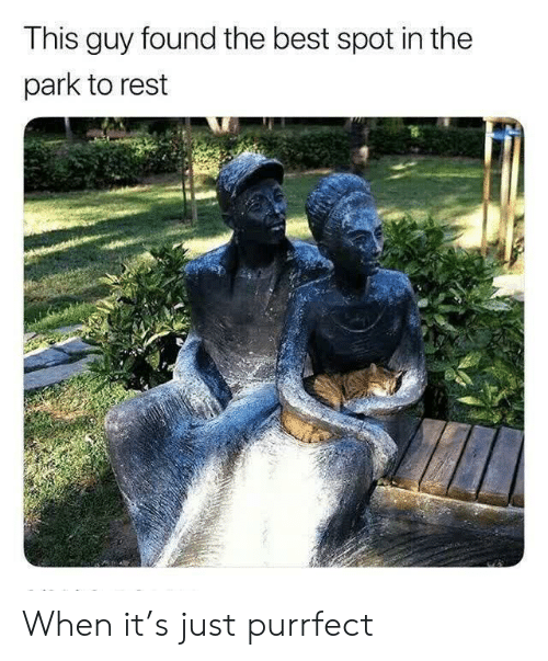 Best, Rest, and Park: This guy found the best spot in the  park to rest When it's just purrfect