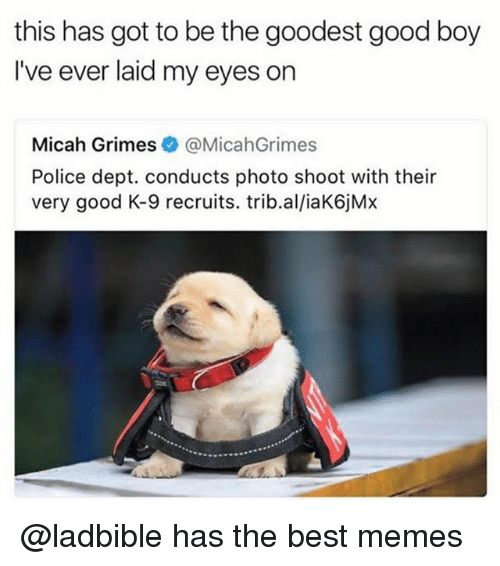 k-9: this has got to be the goodest good boy  I've ever laid my eyes on  Micah Grimes@MicahGrimes  Police dept. conducts photo shoot with their  very good K-9 recruits. trib.al/iaK6jMx @ladbible has the best memes