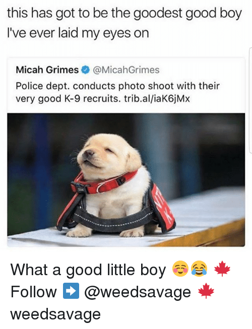 k-9: this has got to be the goodest good boy  I've ever laid my eyes on  Micah Grimes&@MicahGrimes  Police dept. conducts photo shoot with their  very good K-9 recruits. trib.al/iaK6jMx What a good little boy ☺😂 🍁Follow ➡ @weedsavage 🍁 weedsavage