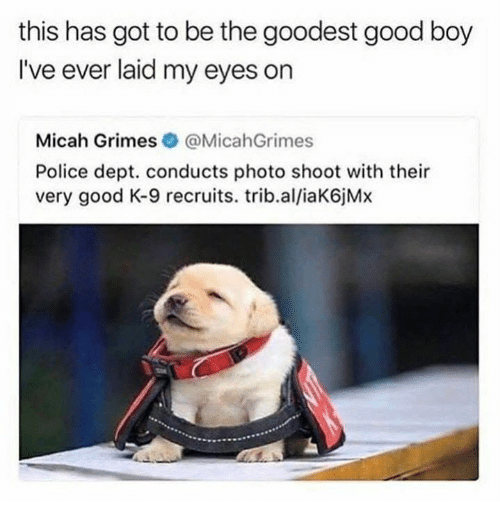Police, Good, and Boy: this has got to be the goodest good boy  I've ever laid my eyes on  Micah Grimes@MicahGrimes  Police dept. conducts photo shoot with their  very good K-9 recruits. trib.al/iaK6jM>x