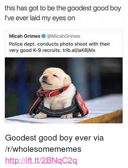 "Police, Good, and Http: this has got to be the goodest good boy  I've ever laid my eyes on  Micah Grimes @MicahGrimes  Police dept. conducts photo shoot with their  very good K-9 recruits. trib.al/iaK6jMx <p>Goodest good boy ever via /r/wholesomememes <a href=""http://ift.tt/2BNqC2q"">http://ift.tt/2BNqC2q</a></p>"