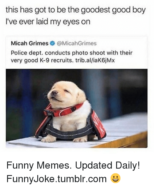 k-9: this has got to be the goodest good boy  I've ever laid my eyes on  Micah Grimes @MicahGrimes  Police dept. conducts photo shoot with their  very good K-9 recruits. trib.al/iaK6jMx Funny Memes. Updated Daily! ⇢ FunnyJoke.tumblr.com 😀