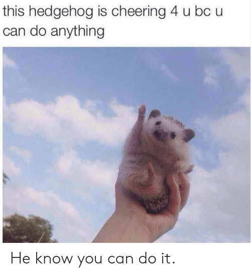 cheering: this hedgehog is cheering 4 u bc u  can do anything He know you can do it.