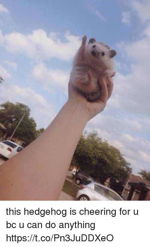 Hedgehoging: this hedgehog is cheering for u bc u can do anything https://t.co/Pn3JuDDXeO