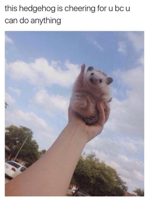 Hedgehoging: this hedgehog is cheering for u bc u  can do anything
