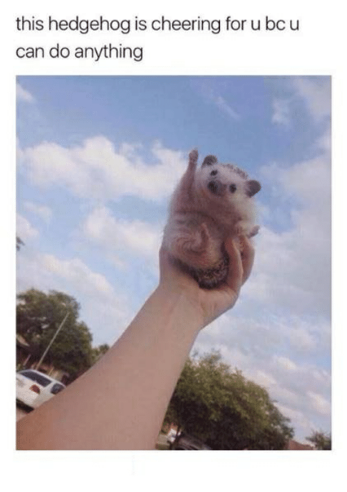 Hedgehoging: this hedgehog is cheering for u bcu  can do anything