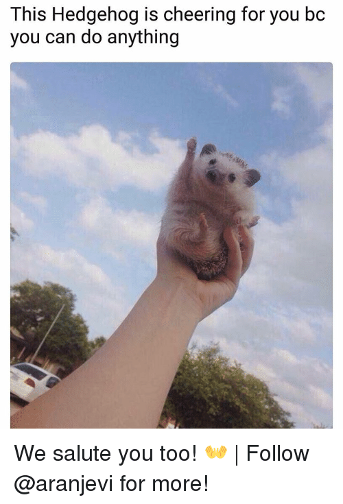 We Salute You: This Hedgehog is cheering for you bc  you can do anything We salute you too! 👐 | Follow @aranjevi for more!