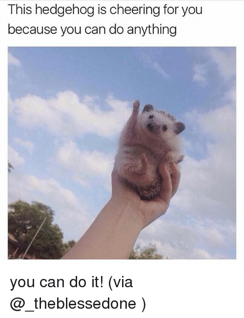Hedgehoging: This hedgehog is cheering for you  because you can do anything you can do it! (via @_theblessedone )