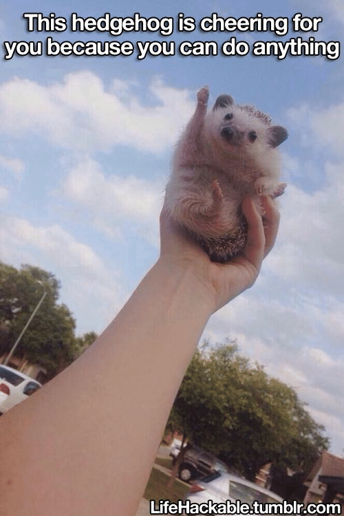 Lifehackable: This hedgehog is cheering for  you because you can do anything  LifeHackable.tumblr.com