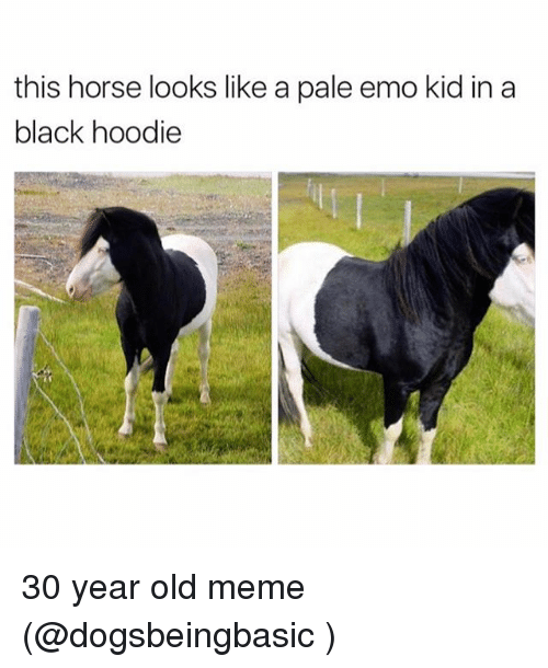 emo kids: this horse looks like a pale emo kid in a  black hoodie 30 year old meme (@dogsbeingbasic )