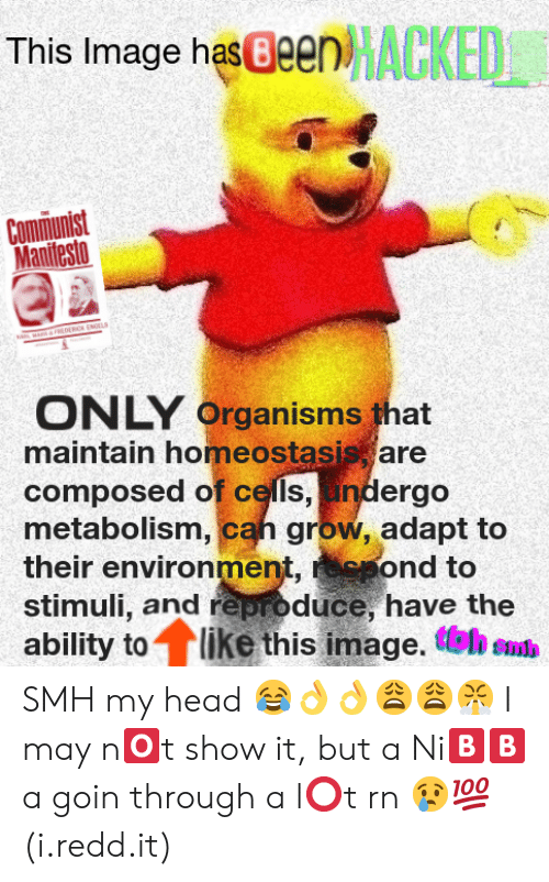 Head, Smh, and Image: This Image has Been  Manifesto  ONLY  maintain homeostasis are  composed of cells, indergo  metabolism, cah grow, adapt to  their environmen  stimuli, and reproduce, have the  ability to like this image. tel eud  Organisms that  ond to SMH my head 😂👌👌😩😩😤 I may n🅾️t show it, but a Ni🅱️🅱️a goin through a l⭕t rn 😢💯 (i.redd.it)